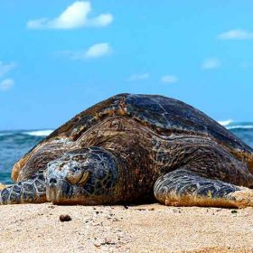 Protecting Sea Turtles - what you need to know | Latchi Watersports Centre in Cyprus