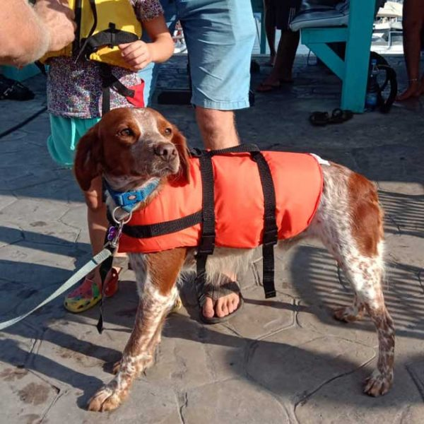 Pet Buoyancy Aid & Harness (Dog & Cat Lifejacket)